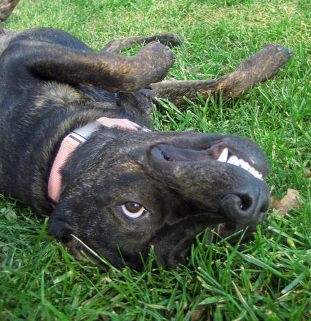 Remington the Mixed Breed Pictures 757663