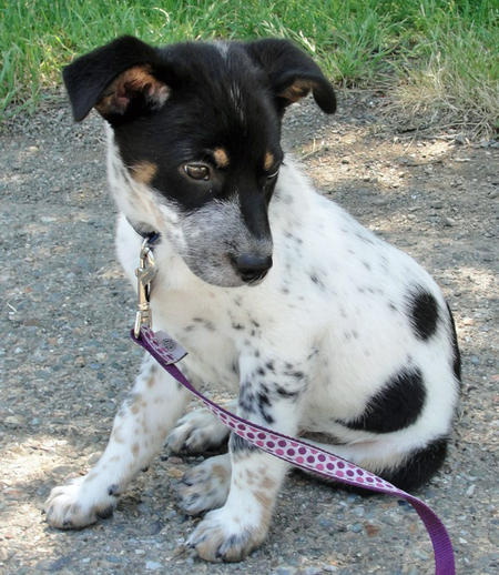 Riley the Cattle Dog Mix Pictures 803745