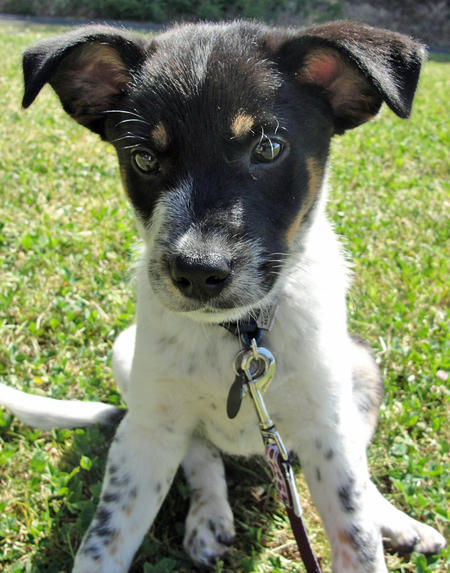Riley the Cattle Dog Mix Pictures 803746