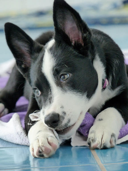 Ripley the Border Collie Mix Pictures 1036151