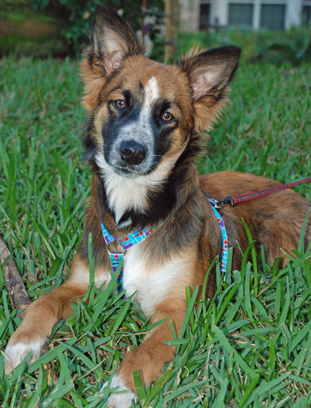 Rocko the Mixed Breed Pictures 1037482