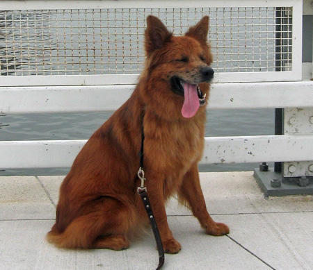 Roxie the Mixed Breed Pictures 1039794