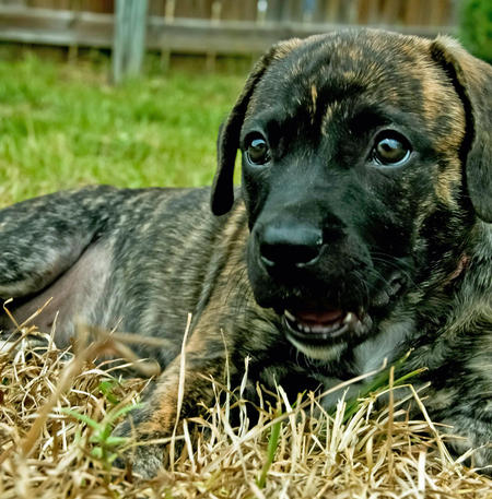Rueberri the Mixed Breed Pictures 937004