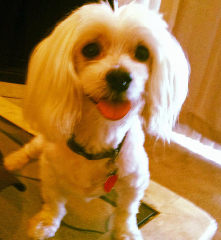 Rupert the Maltese Pictures 988292