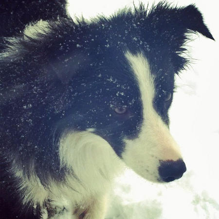 Rylee the Border Collie Pictures 1008142