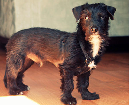 Sailor the Terrier Mix Pictures 805627