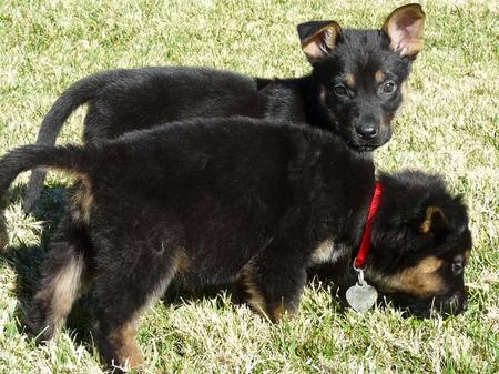 Sara and Haley the Adoptable Puppies Pictures 701366