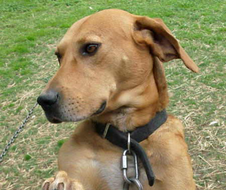 Scooby the Mixed Breed Pictures 479599