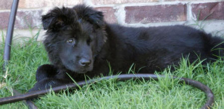 Scout the Mixed Breed Pictures 1039290