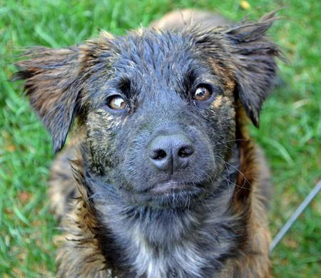 Shay the Mixed Breed Pictures 1014981