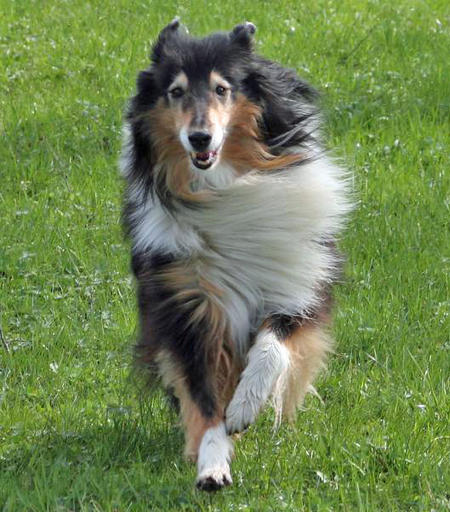 Sona the Collie Pictures 561685