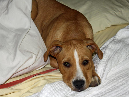 Stella the Mixed Breed Pictures 1044207