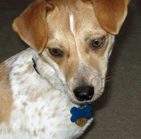 Sunny the Mixed Breed Pictures 806628