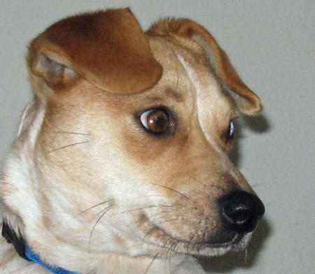 Sunny the Mixed Breed Pictures 806629