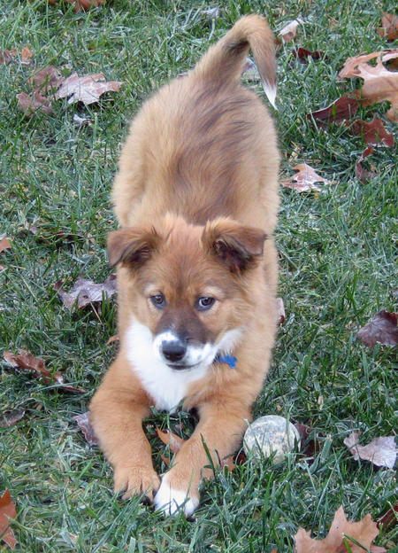 Tanuki the Border Collie Mix Pictures 488825