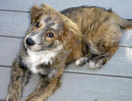 Taylor the Mixed Breed Pictures 853546