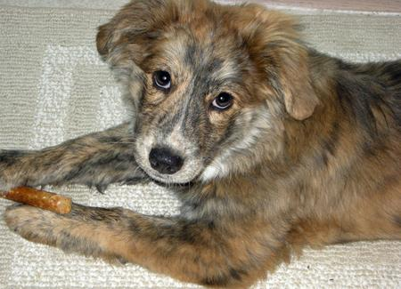Taylor the Mixed Breed Pictures 853547