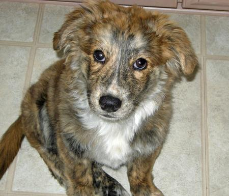 Taylor the Mixed Breed Pictures 853550
