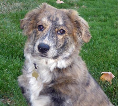Taylor the Mixed Breed Pictures 853551