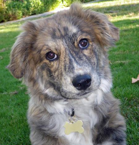 Taylor the Mixed Breed Pictures 853552