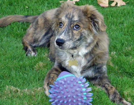 Taylor the Mixed Breed Pictures 853545