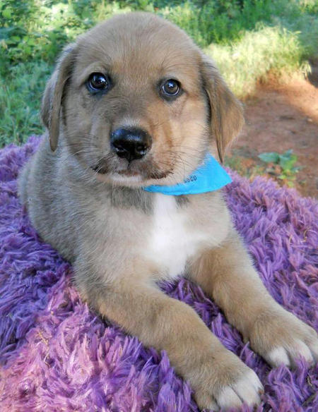 The Adoptable Collie Mix Puppies Pictures 598245