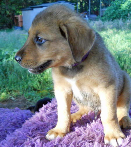 The Adoptable Collie Mix Puppies Pictures 598248