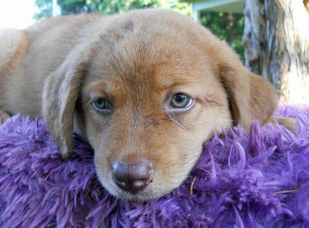 The Adoptable Collie Mix Puppies Pictures 598250