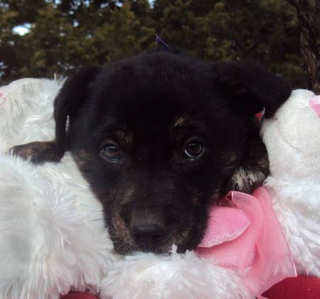 The Adoptable Coonhound Mix Puppies Pictures 537485