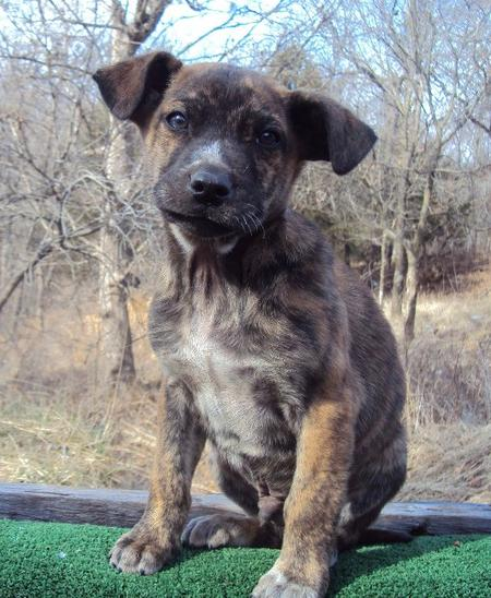 The Adoptable Coonhound Mix Puppies Pictures 537503