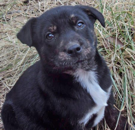 The Adoptable Coonhound Mix Puppies Pictures 537477