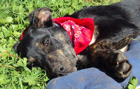 The Adoptable Doberman Mix Pictures 574031