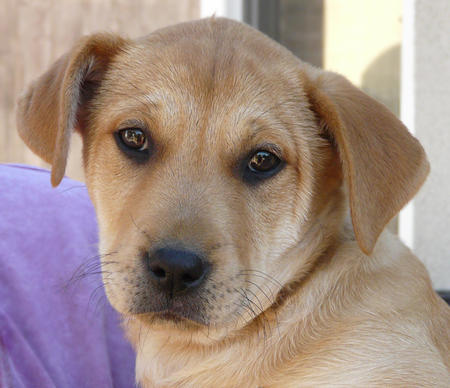 The Adoptable Mixed Breed Puppies Pictures 740311