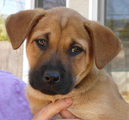 The Adoptable Mixed Breed Puppies Pictures 740297