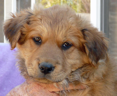 The Adoptable Mixed Breed Puppies Pictures 823068
