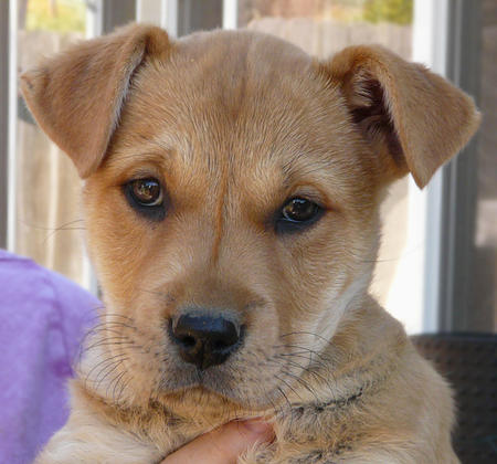 The Adoptable Mixed Breed Puppies Pictures 823071
