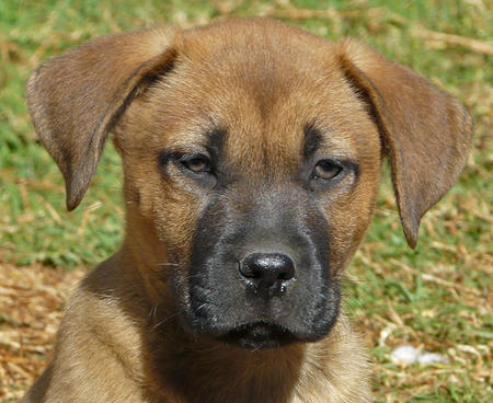 The Adoptable Mixed Breed Puppies Pictures 823072