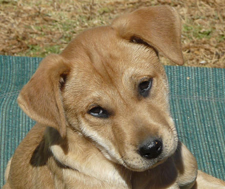 The Adoptable Mixed Breed Puppies Pictures 823073