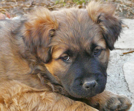 The Adoptable Mixed Breed Puppies Pictures 823075