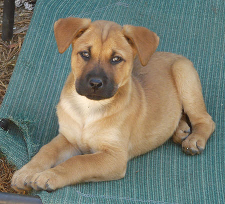 The Adoptable Mixed Breed Puppies Pictures 823066