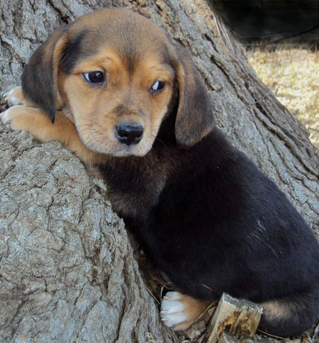 The Adoptable Mixed Puppies Pictures 417639