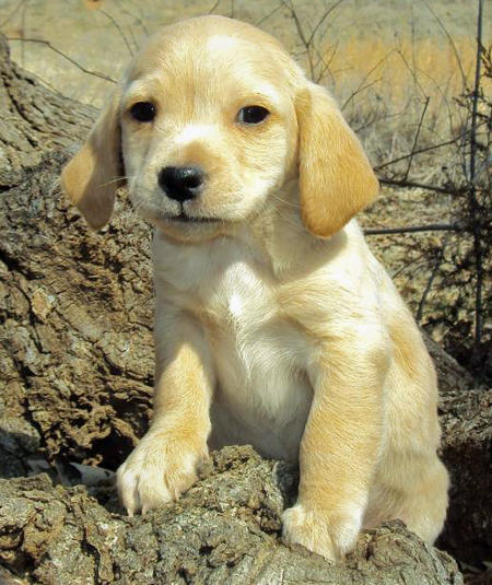 The Adoptable Mixed Puppies Pictures 417644