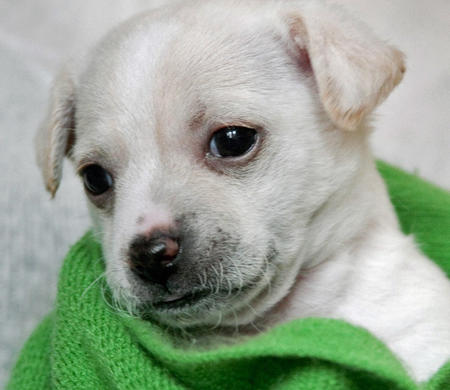 The Adoptable Puppies Pictures 458035