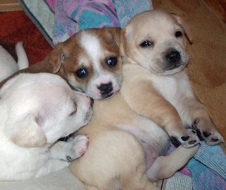 The Adoptable Puppies Pictures 458036