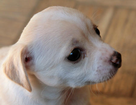 The Adoptable Puppies Pictures 458037