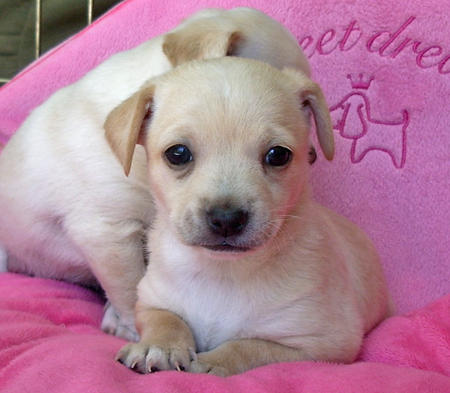The Adoptable Puppies Pictures 458042