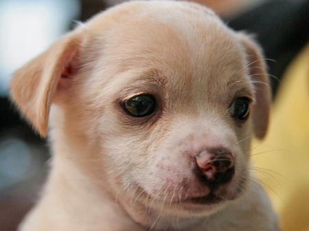 The Adoptable Puppies Pictures 458034