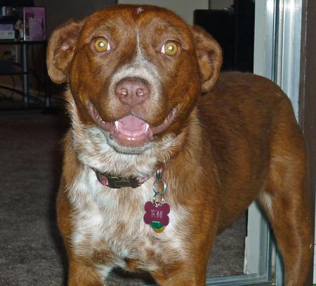 Toni the Mixed Breed Pictures 982098
