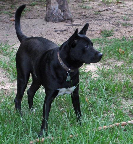 Tuxedo the Mixed Breed Pictures 950922
