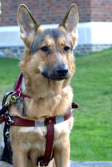Uschi the German Shepherd Pictures 839612